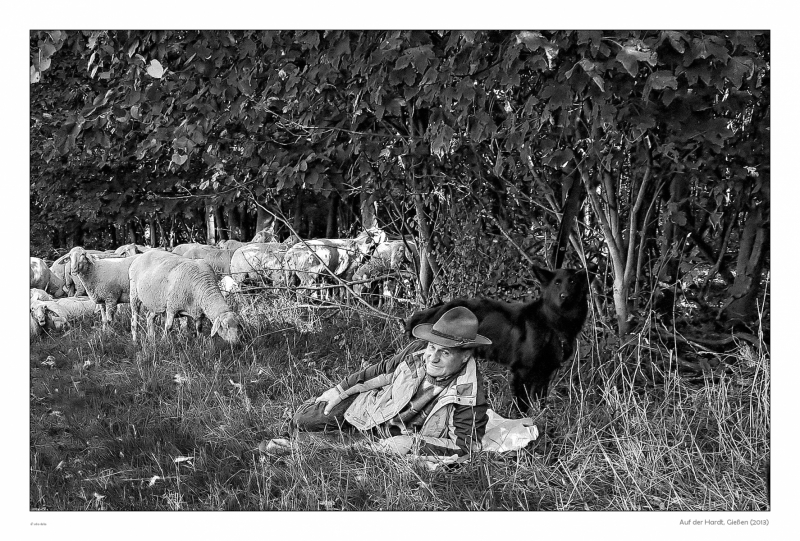shepherd-dog-sheep_15589632884_o